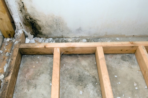 mold basement waterproofing